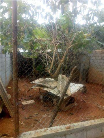Chácara à venda em Nazaré Paulista (Cuiabá), 3 dormitórios, 1 banheiro, 1.000 m2 de área útil, código 36-599 (foto 9/17)